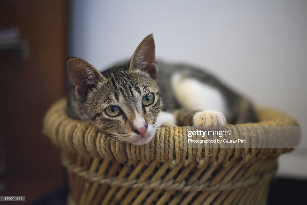 Cat Sleeping at Home : Stock Photo