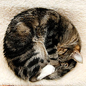 Cat Sleeping Curled into Ball