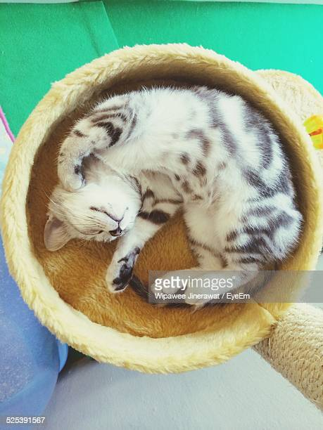 Cat Sleeping In Round Basket