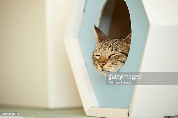 Cat sleeping in the box