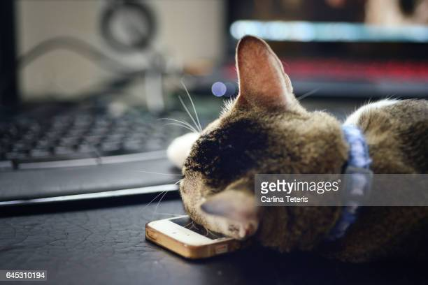 Cat sleeping on a mobile phone in front of a computer