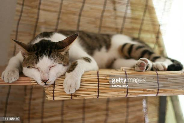 Cat sleeping on bamboo blind