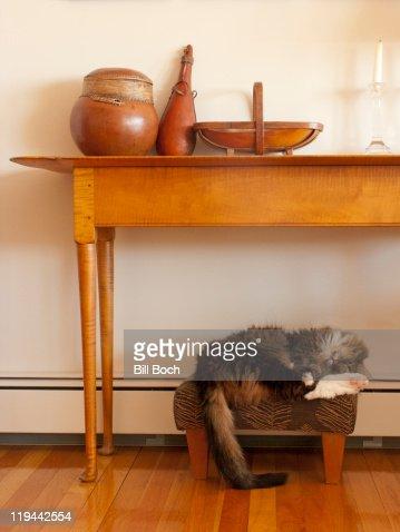 Cat sleeping on foot stool : Foto de stock
