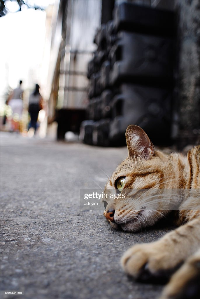 Cat sleeping on street : Stock Photo
