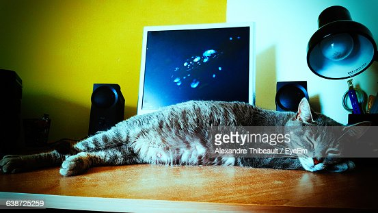 Cat Sleeping On Table At Home : Stock-Foto