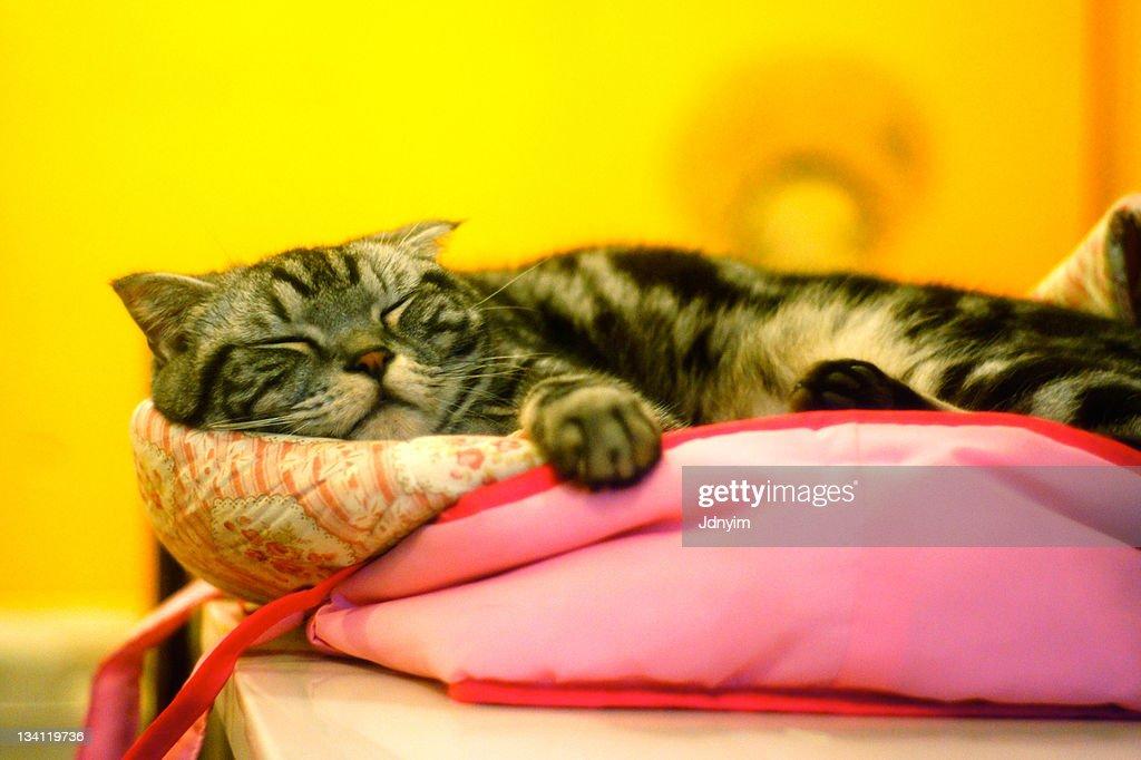 Cat sleeping on table : Stock Photo