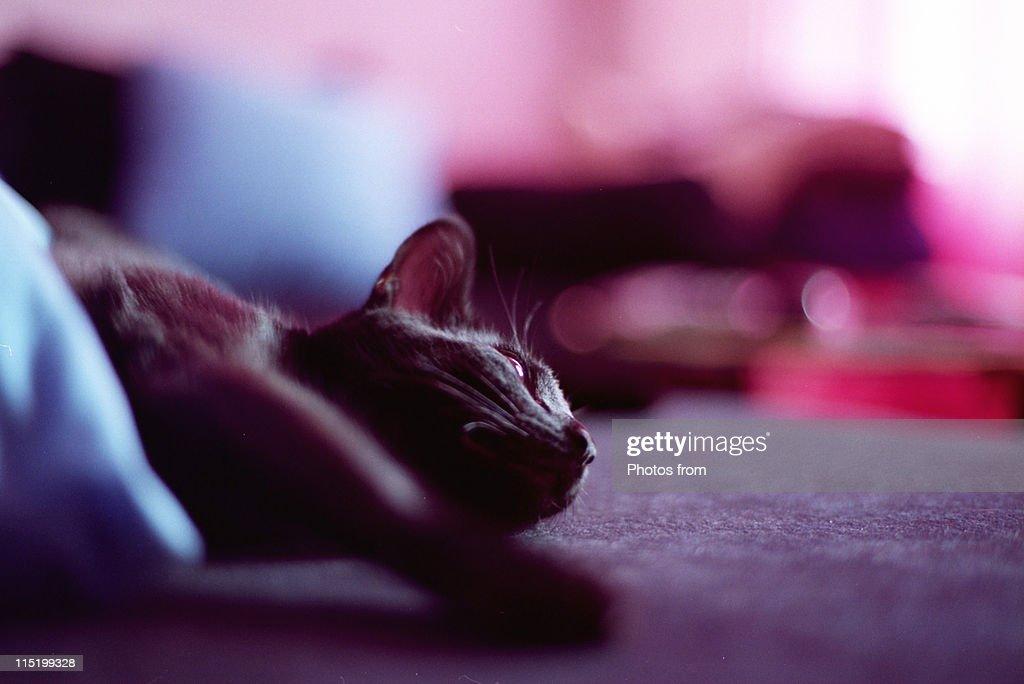 Cat sleeping outside : Stock Photo