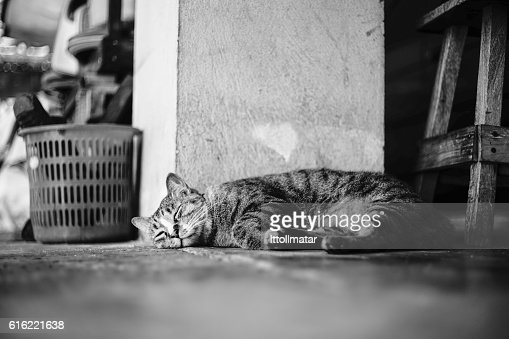 Cat sleeping : Bildbanksbilder