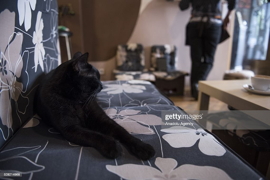 A cat sleeps at the Cat Caffee, Krowoderska 48, Krakow, Poland on May 4, 2016. The Cat Coffee is an attraction for the cat lovers and it is open since the end of June 2015 and has six cats. Two of the cats came from the ' Kocia Academia' fondation and the other four cats were or found on the street.