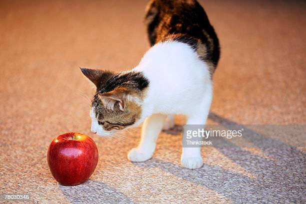 A cat sniffs an apple that is lying on the floor.