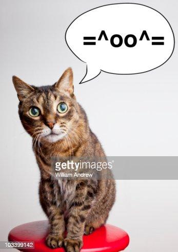 Cat speaking instant message 'cat' symbol