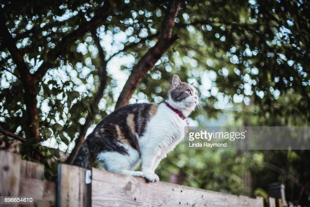 A cat standing on a fence
