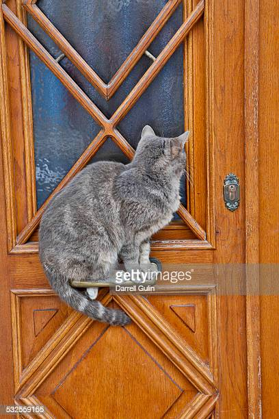 Cat standing on door handle wanting in, Burano, It
