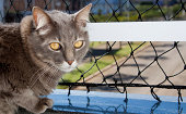 Cat standing on the balcony, protected with a net to avoid it to falling off.
