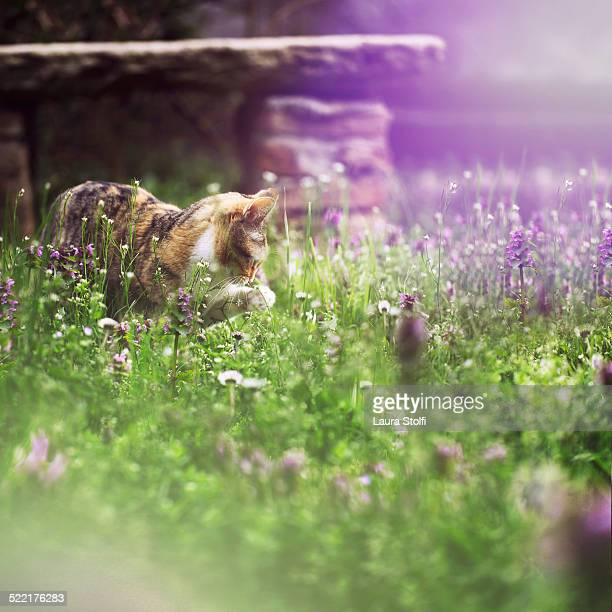 Cat stands in blooming meadow and picks flower