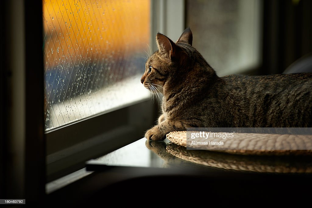 Cat staring out through the window : Stock Photo