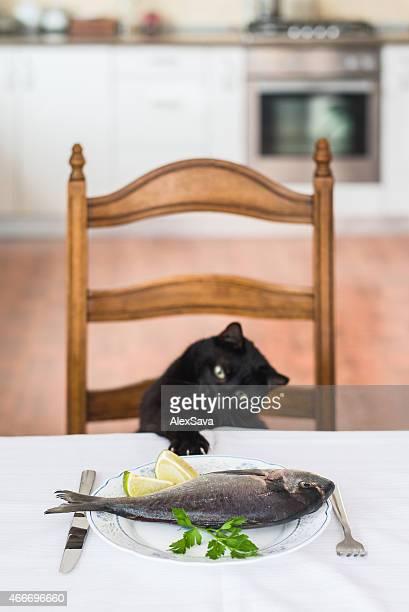 Chat des étirements pour atteindre le poisson sur la table