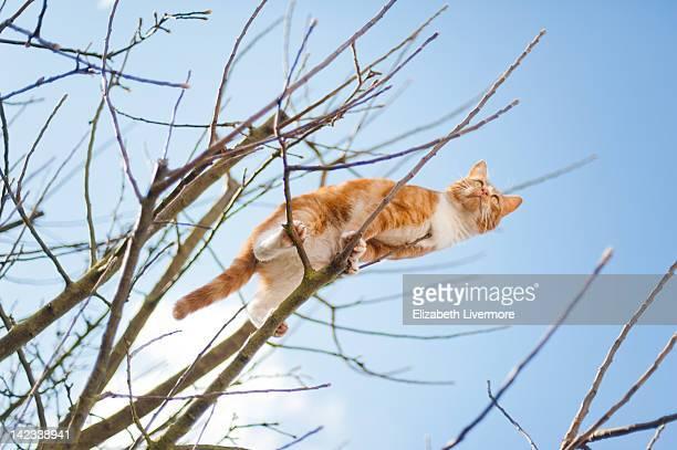 Cat stuck in tree