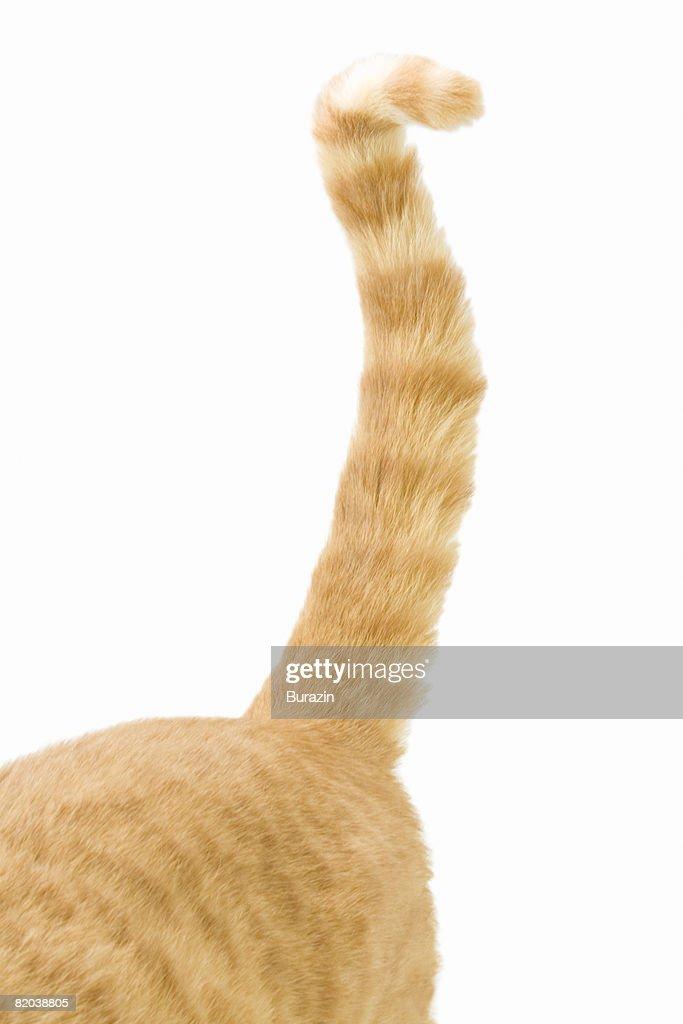 Cat tail : Stock Photo