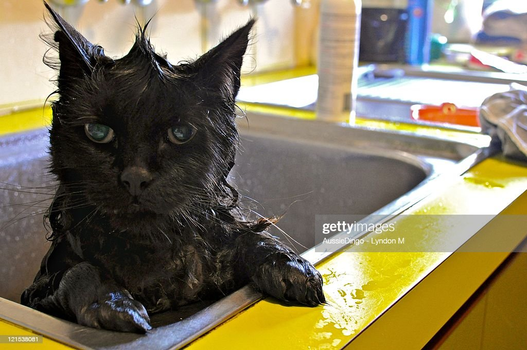 Cat taking bath.