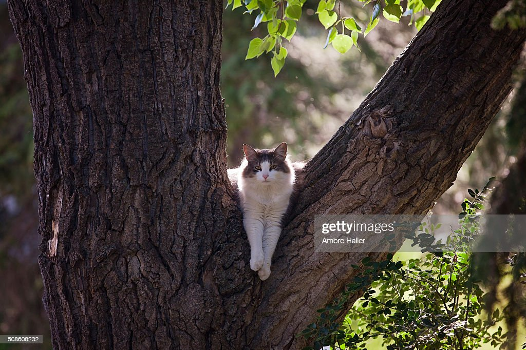 Cat thinks he is Leopard : Stock Photo