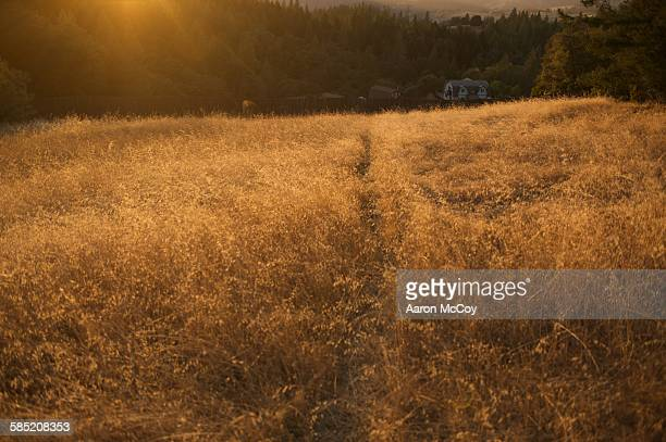 Cat trail