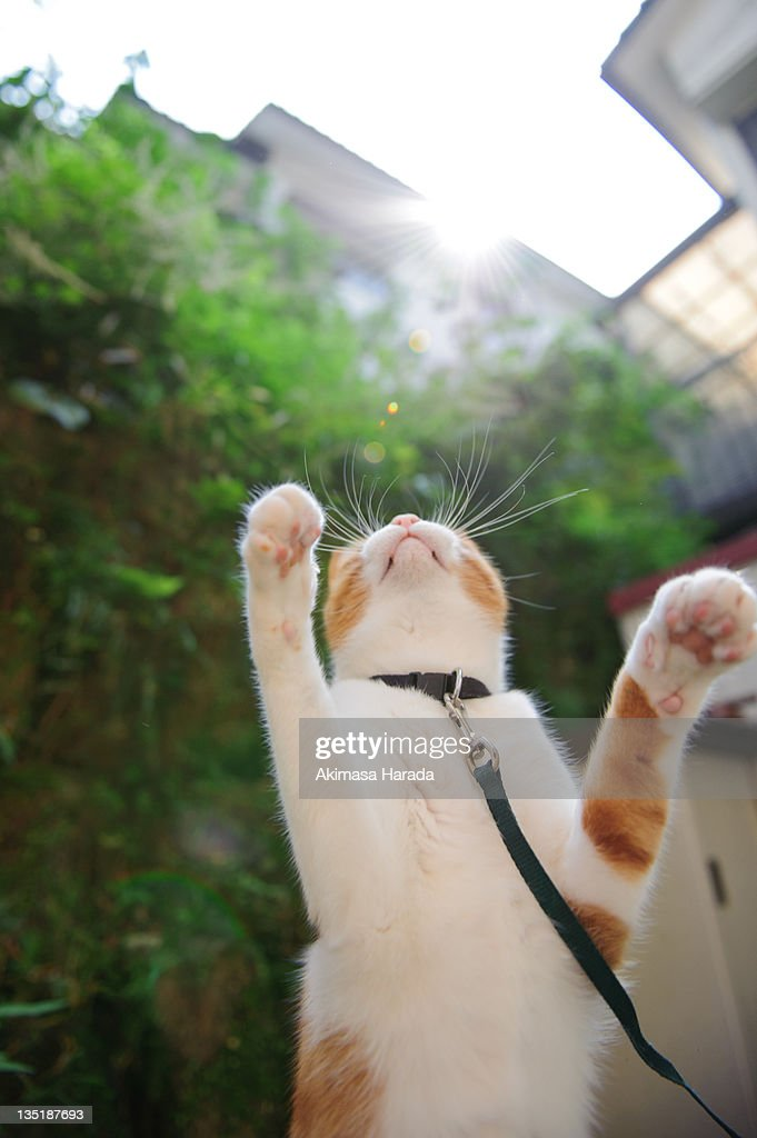 Cat trying to jump : Stock Photo