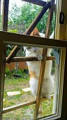 A cat trying to knock on the window; begging to get inside the house