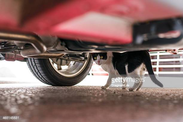 A cat under the car