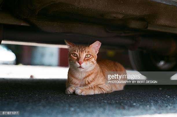 Cat under the car