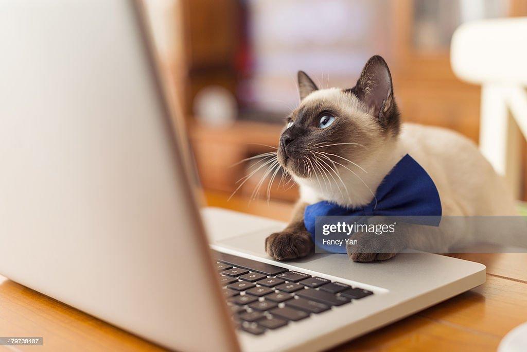 cat using laptop