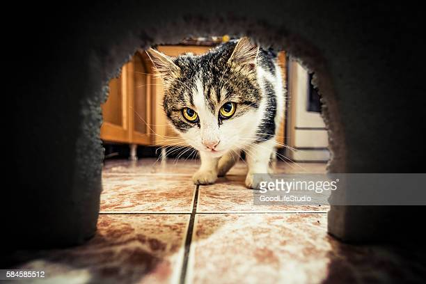 Cat waiting for mouse