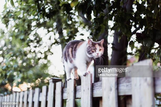 A cat walking on a fence
