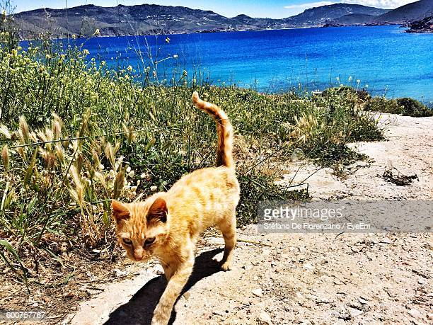 Cat Walking On Beach Against Mountains