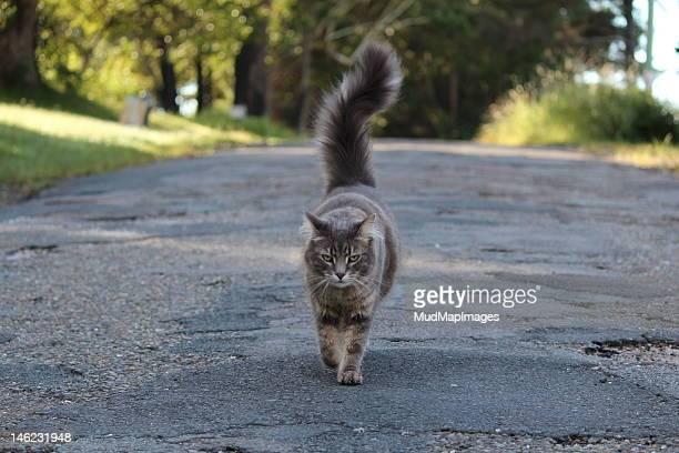 Cat walking on road
