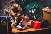 cat walks at home Beautiful Christmas background with new year daccor, gifts, cup and old boxes of wooden background. Christmas card with a Christmas.