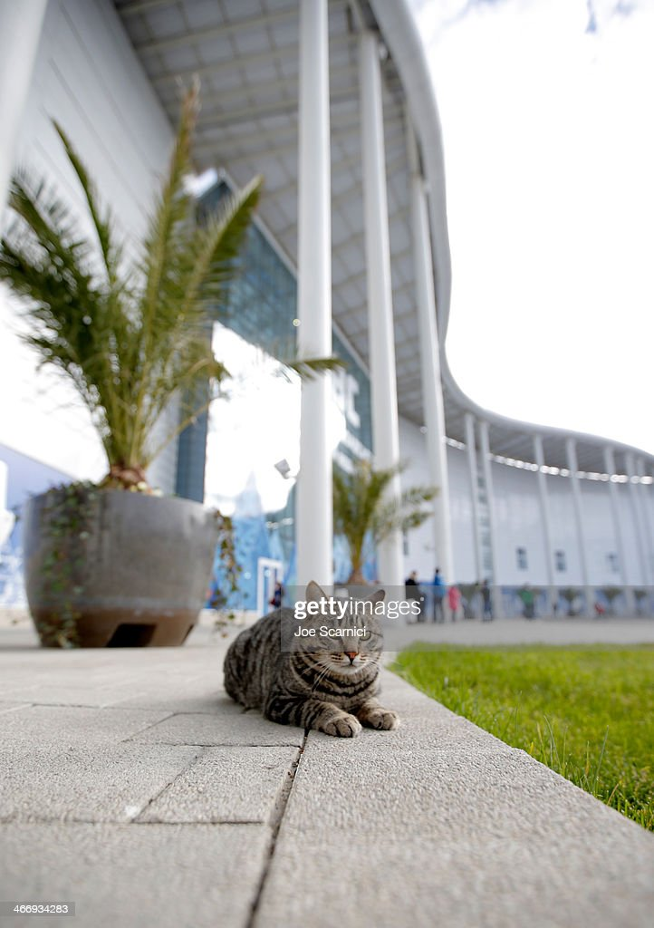 A cat walks outside the Main Press Center ahead of the Sochi 2014 Winter Olympics at the Olympic Park on February 5 2014 in Sochi Russia