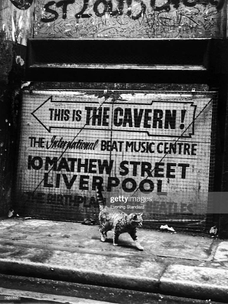 A cat walks past a sign pointing the way to the Cavern,' birthplace' of the Beatles in Liverpool.