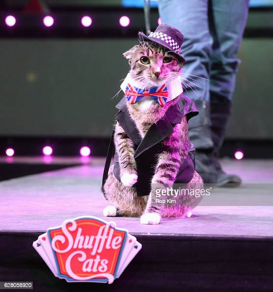 A cat walks the catwalk runway at the 'America's Next Shuffle Cat' Auditions at Marquee on December 6 2016 in New York City