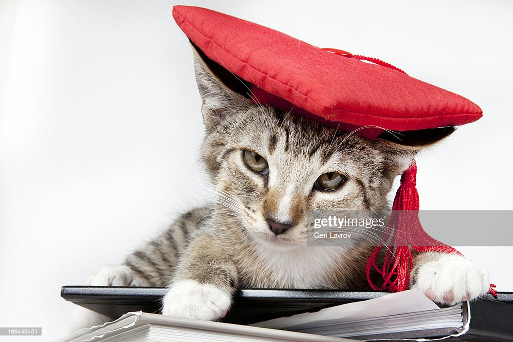 Cat wearing a red graudation cap sitting on books : Stock Photo