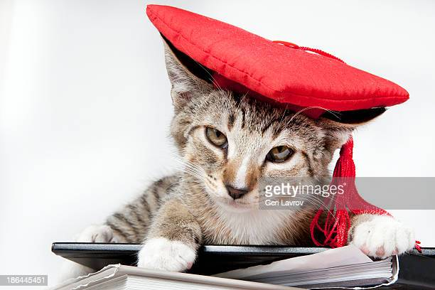 Cat wearing a red graudation cap sitting on books