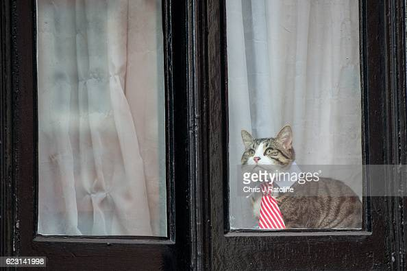 A cat wearing a striped tie and white collar looks out of the window of the Embassy of Ecuador as Swedish prosecutors question Wikileaks founder...