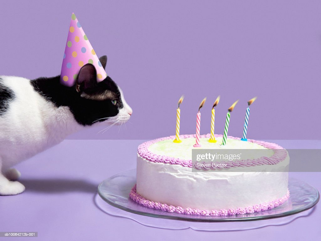 Cat wearing birthday hat blowing out candles on birthday cake : Stock Photo