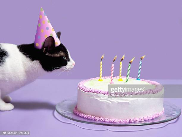 Cat wearing birthday hat blowing out candles on birthday cake