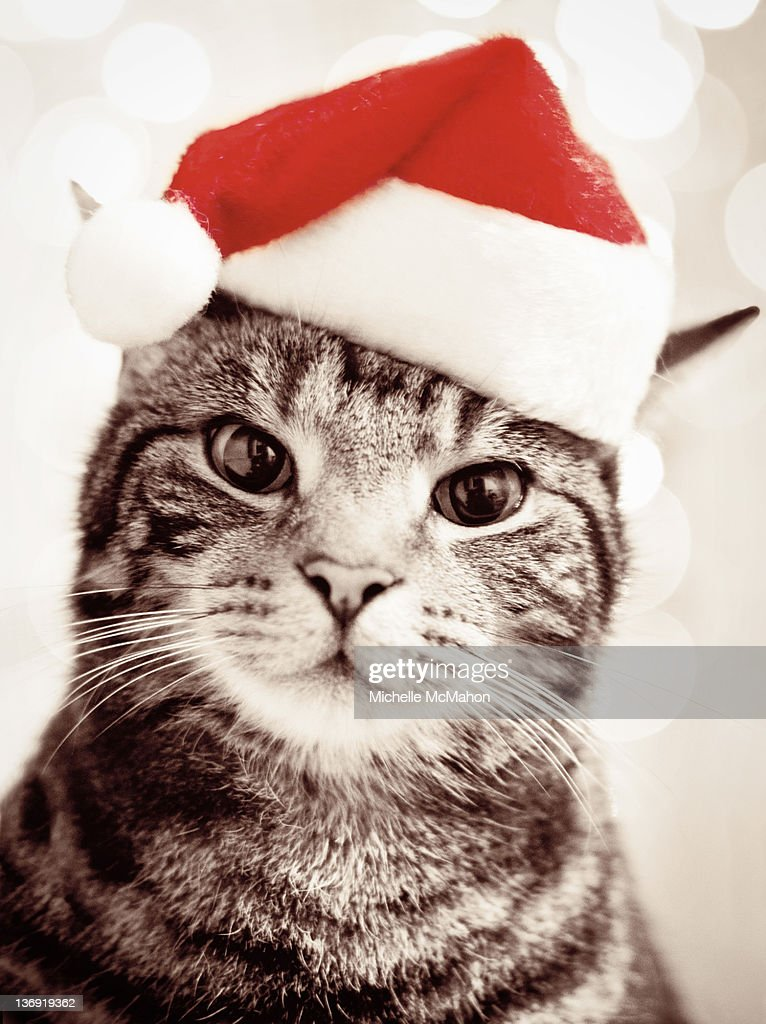 Cat wearing christmas Hat : Stock Photo