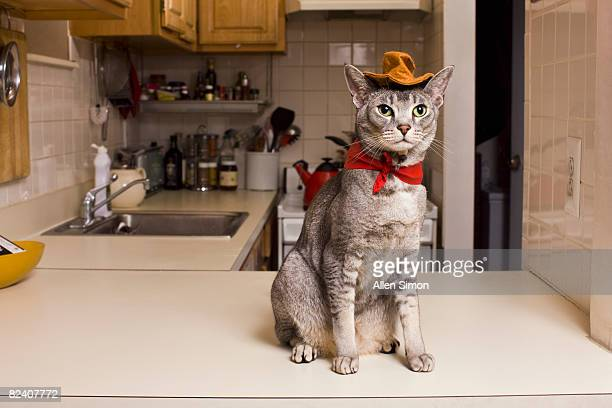 Cat wearing cowboy costume sitting on counter