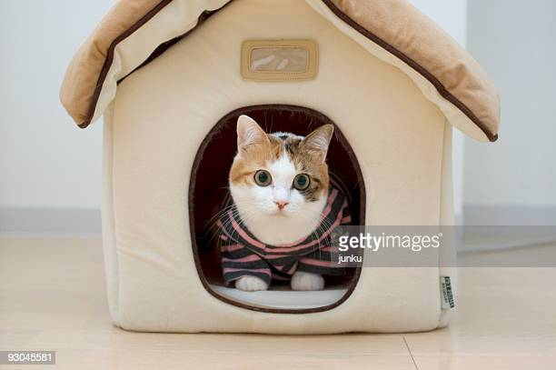 Cat wearing dress sitting  in house