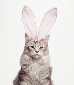 Cat Wearing Easter Bunny Ears