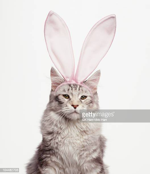 Cat Wearing Easter Bunny Ears
