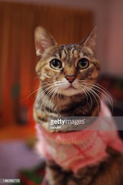 Cat wearing new year dress